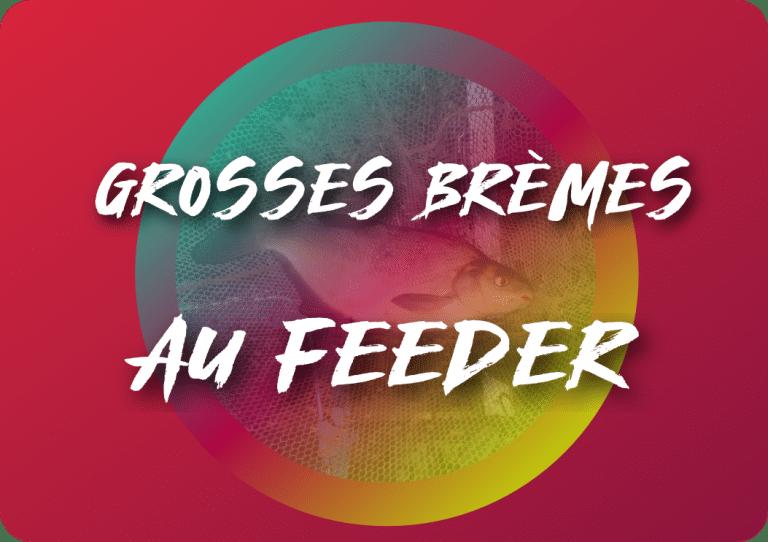 Grosses brèmes au feeder